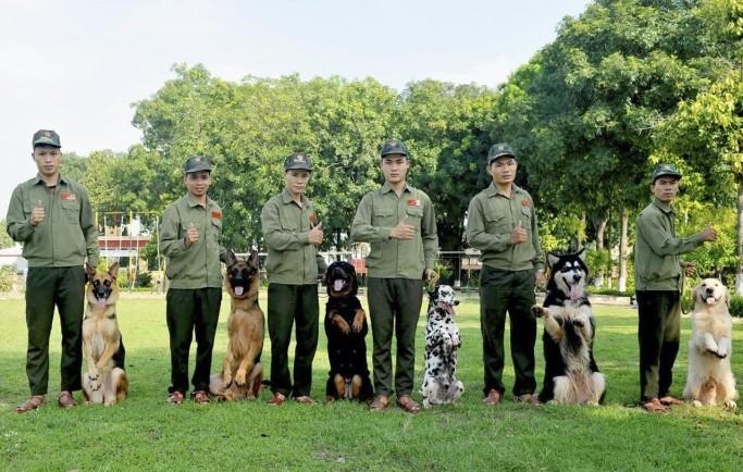 Hoàng Gia phân phối dịch vụ huấn luyện chó TPHCM