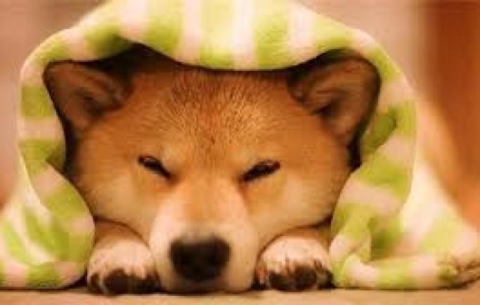 Mơ thấy chó tỷ lệ trúng 100% chính xác