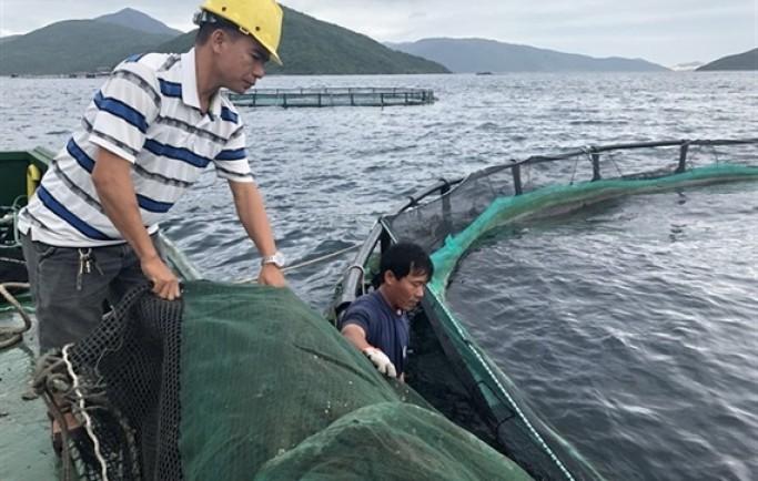 Nuôi cá biển bằng lồng nhựa HDPE theo công nghệ Na Uy