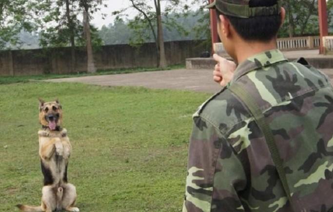 Trung tâm huấn luyện chó chất lượng ở thành phố HCM